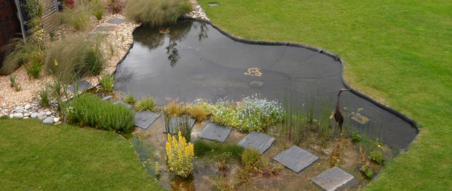 Bassin d'exposition Arrolimousin : le bassin 3 ans plus tard